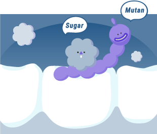 Streptococcus Mutans bacteria are one of the main reason to cause cavity